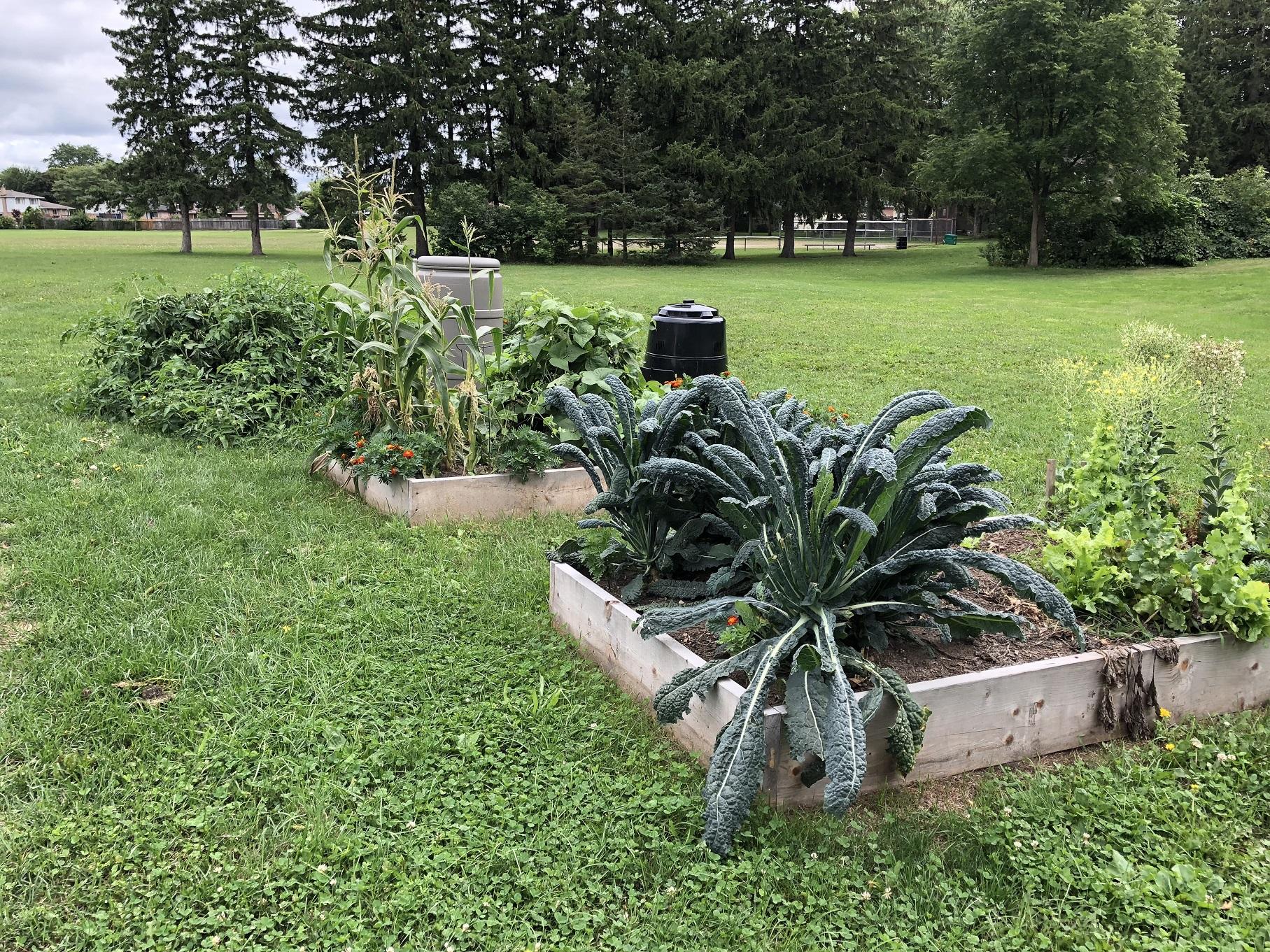 30-08-2018 Spring Gardens (3)resize.jpg