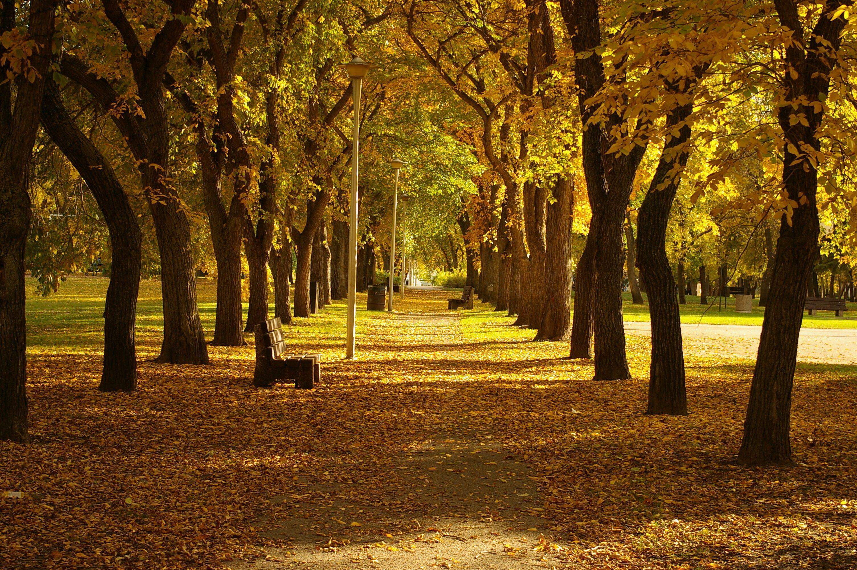Kinsmen Park Autumn 2006.jpg