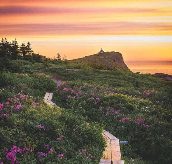 Cape Spear @chelseylawrencephotography.PNG